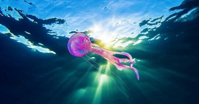 Первая помощь при ожоге медузой